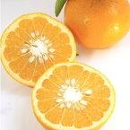 【ふるさと納税】夏みかん 萩産 約5kg 【果物類・柑橘類・フルーツ・みかん・ミカン・蜜柑・くだもの】 お届け:2021年4月1日〜5月31日
