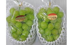 【ふるさと納税】シャインマスカット 2房(1.1kg以上) 【マスカット・フルーツ・果物・ぶどう・果物類】 お届け:2020年8月下旬〜9月下旬 画像1