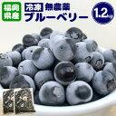 【ふるさと納税】急速冷凍! 栽培期間中無農薬ブルーベリー 1