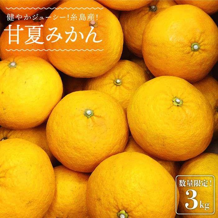 【ふるさと納税】健やかジューシー・夏の味糸島産甘夏みかんL玉・約*3kgABB008