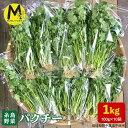 【ふるさと納税】糸島産パクチー1kg (100g×10袋) AFD002