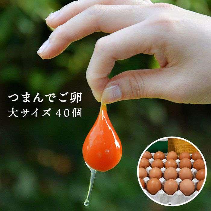 卵, 鶏卵  40 AGA011