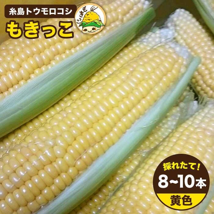【ふるさと納税】糸島トウモロコシもきっこ黄(8〜10本)[AZH001]