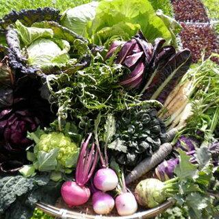 「イタリア野菜」セット