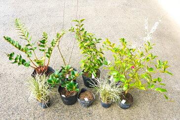 【ふるさと納税】和派Aガーデニングセット8種 花 苗 植物 アレンジ 春 夏 花壇 プランター 厳選 数量限定(BS022)