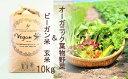 【ふるさと納税】10月15日より発送開始オーガニック葉物野菜セットとビーガン玄米10kg【植物性で育てた完全無農薬のサガンベジブランド】(CQ013)