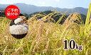 K14-1【ふるさと納税】令和元年産 有田の清らかな水で育った棚田米【白米10kg】