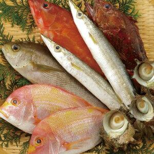 【ふるさと納税】五島列島宇久島地魚詰め合わせ