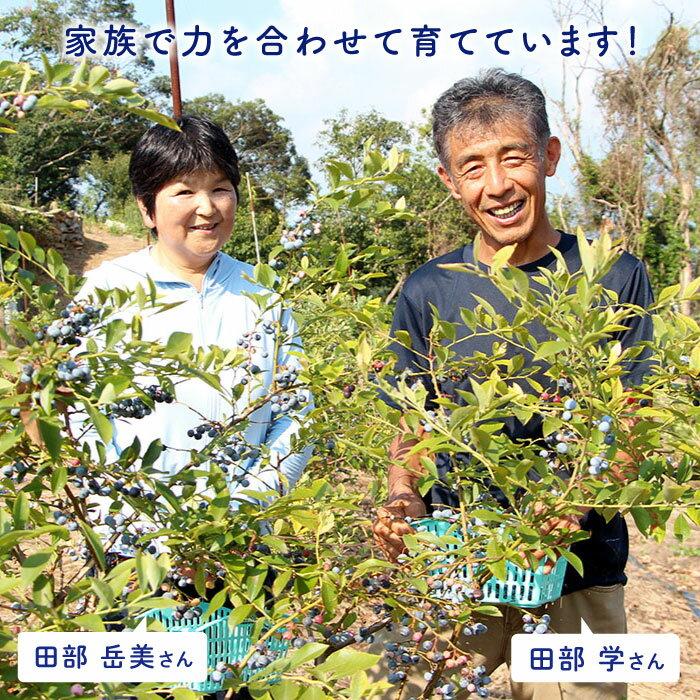 【ふるさと納税】【TVで話題!】青切りシークヮーサー2kg(110〜150個)<広津農園>[CBN011]