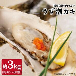 【ふるさと納税】【約3kg(約30個)】うず潮カキ<西彼漁協>[CBZ001]