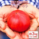 【ふるさと納税】※数量限定※【糖度8度以上の果実】大島トマト3kg<大島造船所農産G> [CCK005]
