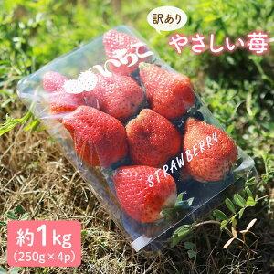 【ふるさと納税】【訳あり】やさしい苺1kg(16〜24玉)<川原農園>[CDR001]
