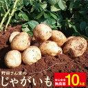 【ふるさと納税】BBS001 【申込みは1/20まで!】完全...