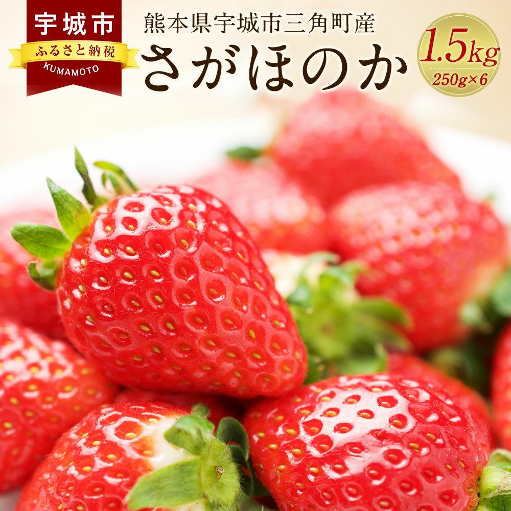 数量限定 熊本県 宇城市三角町産 さがほのか 250g×6パック いちご 合計1.5kg フルーツ 果物 送料無料