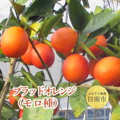 【ふるさと納税】日南産「ブラッドオレンジ・モロ」計3kg以上(24〜30玉)