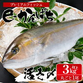 【ふるさと納税】東京オリンピック供給資格「AEL(養殖エコラベル)」認証取得のカンパチ!活き〆プレミアムフィッシュ「e-かんぱち」丸ごと1尾(ラウンド・3.0kg〜3.8kg)【丸栄水産】【AG-CD1】