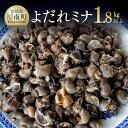 【ふるさと納税】よだれミナ(シマミクリ貝・シマアラレミクリ貝)