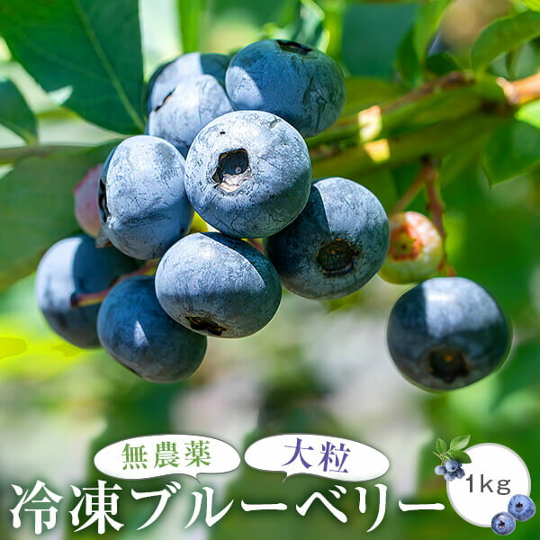 フルーツ・果物, ブルーベリー  1kg500g2