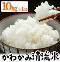 【ふるさと納税】かわかみ清流米(ひのひかり・10kg×1袋)