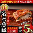 【ふるさと納税】《丑の日までにお届け》生産量日本一!鹿児島県