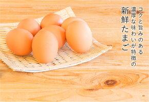 【ふるさと納税】毎月お届け!菊ちゃん厳選の特級卵定期便