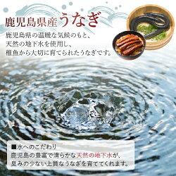 【ふるさと納税】鹿児島県産カットうなぎ蒲焼300g以上 画像1
