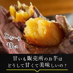 【ふるさと納税】鹿児島県産冷凍焼き芋紅はるか3kg!鹿児島県産サツマイモべにはるかをやきいもにして急速冷凍!糖度50度以上の極蜜芋はまさに自然のスイーツ♪【甘いも販売所】・・・ 画像2