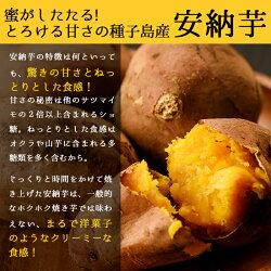【ふるさと納税】種子島産 安納芋(10kg)【砂坂展恵】 画像2