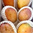 【ふるさと納税】訳あり品!!大宜味村産マンゴー【2Kg・白箱...
