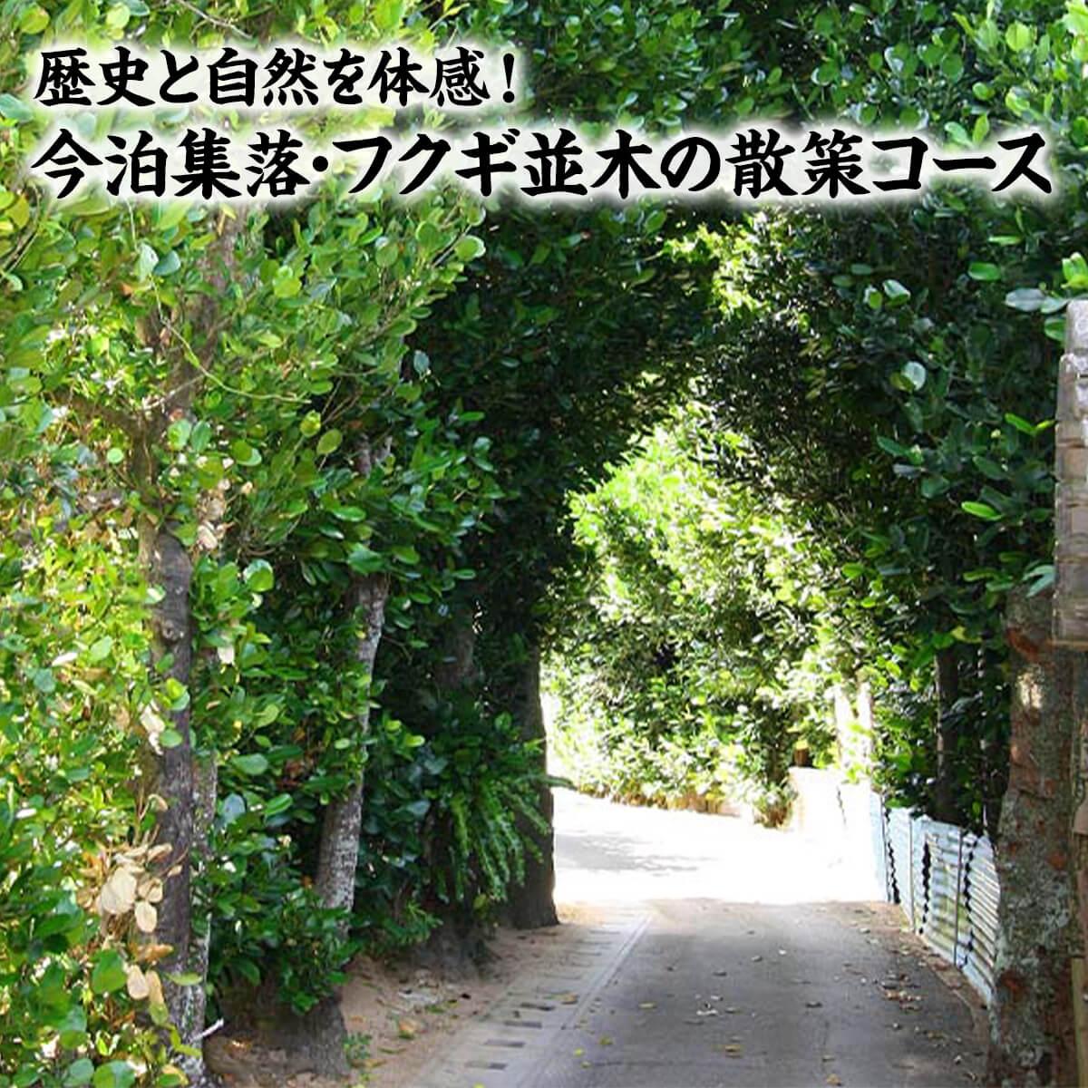 歴史と自然を体感!(今泊集落・フクギ並木の散策コース)