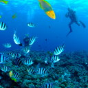 【ふるさと納税】1名様 青の洞窟体験ダイビング(ボート)