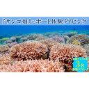 【ふるさと納税】沖縄サンゴの村の『サンゴ畑』でボート体験ダイビング(3名様)
