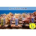 【ふるさと納税】沖縄サンゴの村で『サンゴ苗作り体験』「1名様」