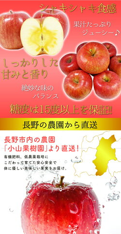 【訳あり】減農薬長野サンふじりんご約4.5kg12〜25個入リンゴ林檎産地直送小山