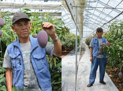 減農薬 マンゴー 太陽の子 2L 2玉