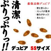 (活餌)デュビア SS 約50匹(1カップ)代引不可 【水槽/熱帯魚/観賞魚/飼育】【生体】【通販/販売】【アクアリウム】