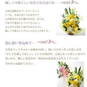 【ペットのお供え花】送料無料フラワーギフト・色について