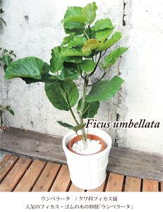 季節の花鉢シリーズ
