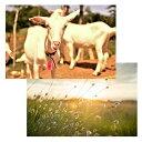 グラスフェッドヤギミルク ミニボトル 150ml [レ・ド・シェーブル](ヤギ やぎ 山羊 ヤギミルク 山羊乳) 3