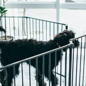 Scandinavian Pet Design ハースゲート ゲートセクション