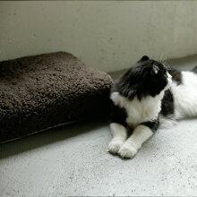 犬のベッド/シンプルシープボアフリースベッド