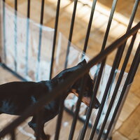 XXL,子犬,パピー,すり抜け,防止,難燃性,静電防止,帯電防止