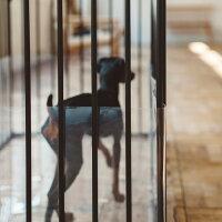 仔犬,小型犬,パピー,すり抜け,防止,北欧ゲージ専用,ベビーダン専用,サイドシート