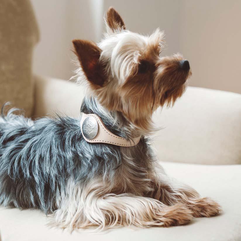 【犬 首輪】オリジナル ヌメ コンチョカラー S 犬用犬 犬用品 首輪 犬 首輪 首輪 レザー 革 いぬ くびわ