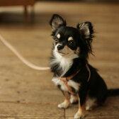 革で作られた小型犬用のヌメリングリード S 犬 リード/皮/リ−ド/リ-ド