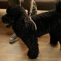 中型〜大型犬用ヌメ革1枚仕立てハーネス