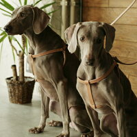 小型犬用ヌメ革2枚仕立てハーネス