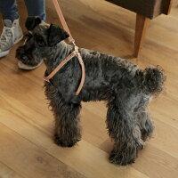 小型犬用ヌメ革1枚仕立てのハーネス
