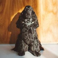 ハーフチョーク/小型犬用/ヌメ/ウーブン