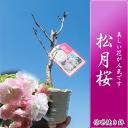 Shougetu1_1